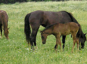 All foals deserve to grow up in a nurturing, family herd environment.